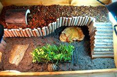 i think Sherlock would LOVE this!...so we're doing it! Cute Russian tortoise habitat idea.