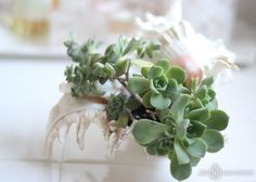 Sea Shell succulent planter
