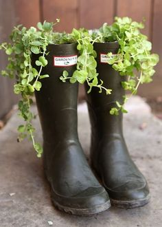 Sweet cascading greens are understated and elegant in simple black rain boots. See more at Happiness Is »  - GoodHousekeeping.com (drill or punch holes so water will drain)