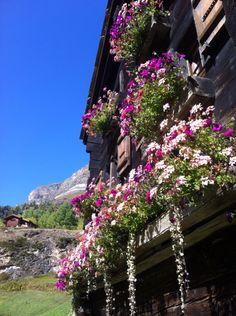 Flower boxes Zermatt Switzerland
