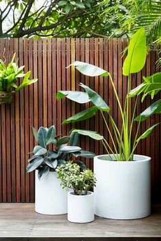 Small backyard patio, Backyard patio designs, Patio plants, Outdoor landscaping,… - Home & DIY Backyard Barn, Backyard Patio Designs, Small Backyard Landscaping, Cozy Backyard, Deck Patio, Modern Backyard, Landscaping Tips, Courtyard Landscaping, Backyard Retreat
