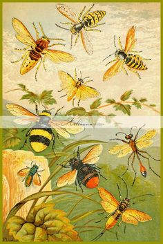 Vintage Illustration ARTEFACTS - antique images: Insects — for personal use only! Art And Illustration, Vintage Illustrations, Antique Illustration, Antique Art, Vintage Antiques, Buzz Bee, Vintage Bee, Shabby Vintage, Vintage Yellow