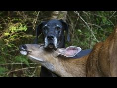 Dog and a deer are BFF's! So cute!