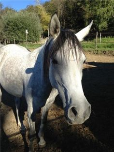 Oltre 60 cavalli per Premio internazionale Purosangue Arabo dal 19 al 21 luglio al Parco di Villa Inzoli a Tradate. http://www3.varesenews.it/tempo_libero/oltre-60-cavalli-per-premio-internazionale-purosangue-arabo-292965.html #varese #tradate