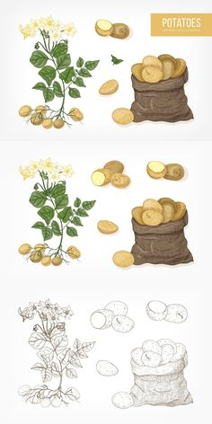 Vegetable Design, 2 Colours, Adobe Illustrator, Hand Drawn, Monochrome, How To Draw Hands, Archive, Potatoes, Photoshop