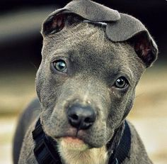 Baby pit