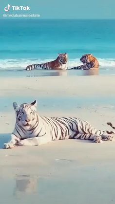 Cute Wild Animals, Cute Little Animals, Animals And Pets, Nature Animals, Cute Animal Photos, Cute Animal Videos, Animal Pictures, Funny Cute Cats, Cute Funny Animals