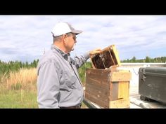 A researcher at the Vidalia Onion & Vegetable Research Center in Toombs County has a side-project that's beneficial to crops in the area.  He's building colonies of honeybees by attracting them to new hives.  The honeybees, in turn, providing a great service by pollinating area plants.