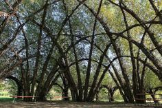 Massive Willow Dome by Marcel Kalberer at Schlepzig; photo by ilurch, via Flickr