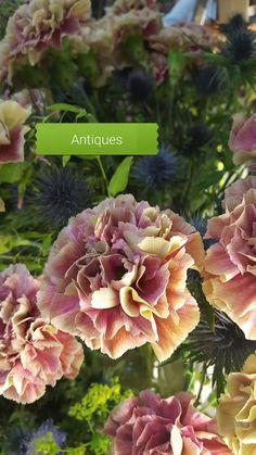 Antiques, Plants, Antiquities, Antique, Plant, Old Stuff, Planets