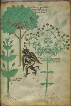 15° secolo - Codex Sloane 4016 - La magica notte di San Giovanni  http://www.thegreenrevolution.it