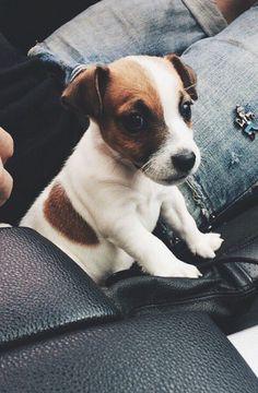 What a cute little fella! ❤