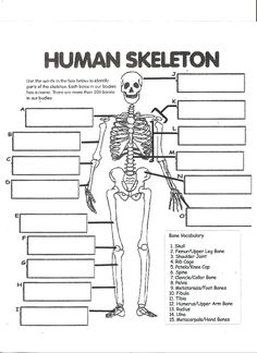 free printable human skeleton worksheet for students and teachers, Skeleton