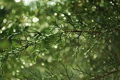 April Rain - A Poem By Sunny Chopra