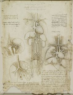 Anatomical drawing of the human heart, lungs, liver and spleen by Leonardo da Vinci; sketch drawn in ink circa From the Royal Collection, London. Michelangelo, Schematic Drawing, Heart And Lungs, Renaissance Men, Chalk Drawings, Human Anatomy, Anatomy Art, Victoria And Albert Museum, Old Master