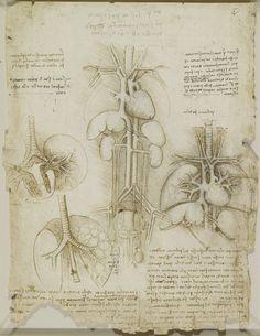 The heart, lungs and other organ Leonardo da Vinci (Vinci 1452-Amboise 1519) #TuscanyAgriturismoGiratola