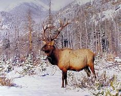Absolutely Fabulous! Bring a touch of wild life centaury to your place by hanging this beautiful bull elk big antler art print wall poster. This would be a perfect addition to your home decor and goes well with all decor style. This poster displays the image of standing bull elk big antler near the Rocky Mountains and snow field which is sure to grab lot of attention. This poster is perfect gift for someone who loves wild animals.