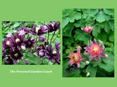 Early Spring Flowering Perennials for Impact! #spring #Flowers #gardendesign