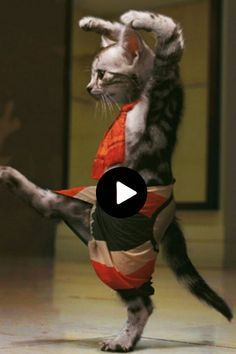 Animals Discover These Anime GIFs Are Too Amusing Warning Not For Underage! Funny Short Videos, Funny Animal Videos, Cute Funny Animals, Cute Baby Animals, Funny Dogs, Animals And Pets, Cute Cats, Funny Memes, Love Pet