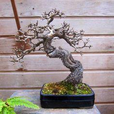 https://yamadeus.files.wordpress.com/2012/02/henk-fresen-pear-bonsai.jpg