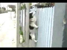 Dog uses support from trestle to climb up and over a fence.