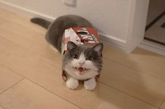 what a cat-astrophe