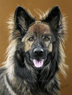 Hundezeichnungen und Hundeportraits in Pastellkreide - Schäferhund - Tierzeichnungen und Tierportraits von Katja Sauer / Dog paintings and dog portraits in soft pastels - Animal painting and animal portraits by Katja Sauer