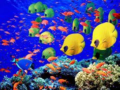 """Search Results for """"underwater tropical fish wallpaper"""" – Adorable Wallpapers Colorful Fish, Tropical Fish, Fauna Marina, Fish Wallpaper, Egypt Wallpaper, Underwater Wallpaper, Coral Wallpaper, Windows Wallpaper, Wallpaper Maker"""