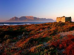 Dawn at Robben Island, Cape Town - Table Mountain as backdrop over Table Bay - South Africa. Cape Town Holidays, Africa Destinations, Le Cap, Cape Town South Africa, Island Tour, All Nature, Day Tours, The Guardian, Live