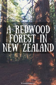 Whakarewarewa Forest: A Redwood Forest in New Zealand