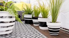 diy – Blumentöpfe bemalen DIY guide for painted flower pots in black White look with plants in the current botany trend Painted Plant Pots, Painted Flower Pots, Red Geraniums, White Plants, Diy Planters, Garden Projects, Diy Painting, Potted Plants, Garden Pots