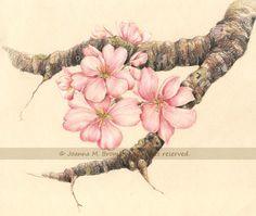 Apple Blossom Branch By JoannaBromleydeviantart On DeviantART