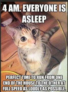 Funny cat quotes, funny cat pics, cute cat memes, cats funny sayings, Funny Animal Jokes, Funny Cat Memes, Cute Funny Animals, Funny Cute, Cute Cats, Funniest Animals, Funny Pics, Super Funny, Funny Humor