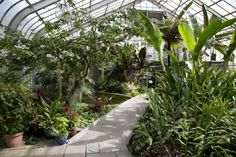 13 Advantages Of Growing Plants Within A Greenhouse