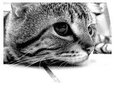 cat by shinoART