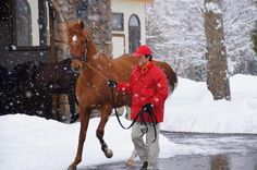 I'll Have Another on stallion parade at the Big Red Farm in Japan