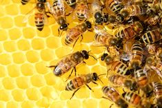 Cute & Surprising Animal Facts.Las abejas se comunican entre ellas me diante una extraña danza.