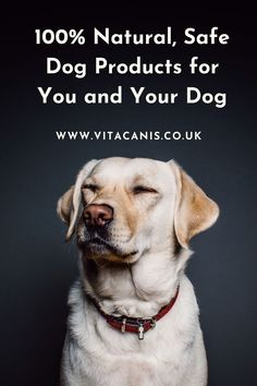 Are you looking for 100% natural, safe dog products for you and your dog? Jitka Krizova of Vita Canis UK has created a range of innovative pet products using essential oils for dogs that are safe to use on pets as well as humans! #dogs #pethealth #dogcare #essentialoils #aromatherapy