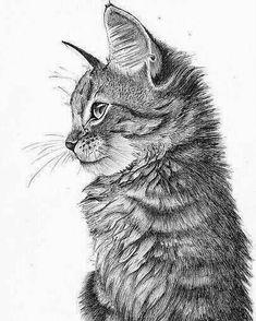 #lovecats