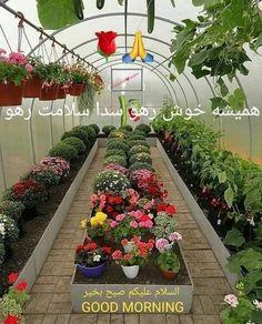 Small Space Gardening, Gardening Tips, Good Morning Beautiful Gif, Cold Frame, Plant Nursery, Winter Garden, Vegetable Garden, Beautiful Flowers, Succulents