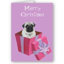 Cute little Pug Present Cards