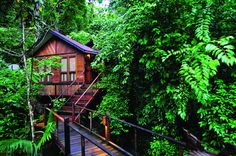 Live amongst the Malaysian jungle in the Jungle Luxe Room at Japa Mala Resort, Malaysia.