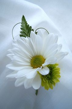 boutonniere daisy white green grass, via Flickr.