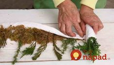 How to propagate coniferous plants by cuttings Moss Garden, Garden Fencing, Goat Farming, Tips & Tricks, White Gardens, Trees And Shrubs, Propagation, Botany, Indoor Plants