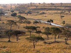 Sabana arbustiva de Tanzania África