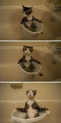 Kitty's bath time!