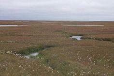 World Biomes - Tundra