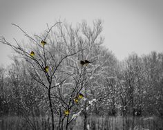 Photograph BirdsInTreeSnow BW by Mary Jackson on 500px