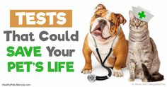 Veterinary diagnostic tests include urinalysis, bloodwork and fecal exams, plus additional tests depending on where the pet lives and risk exposure. http://healthypets.mercola.com/sites/healthypets/archive/2017/03/26/veterinary-diagnostic-tests.aspx?utm_source=petsnl&utm_medium=email&utm_content=art1&utm_campaign=20170326Z1&et_cid=DM137758&et_rid=1940478836