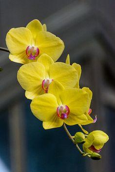 Orchids   por PMillera4
